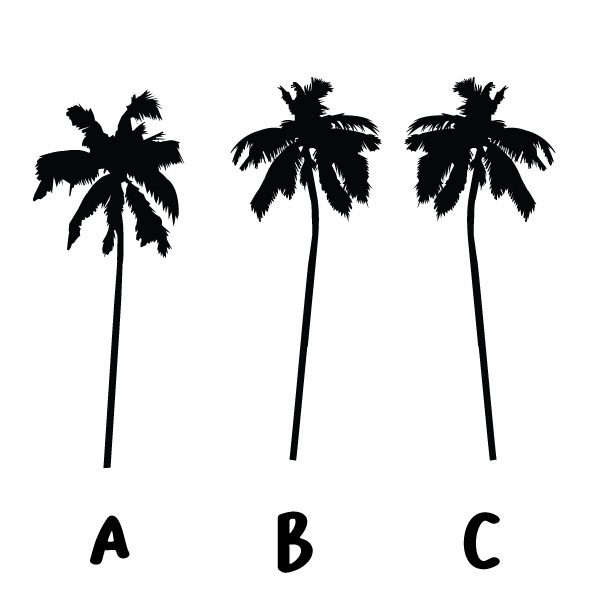 palm tree decals removable monochrome